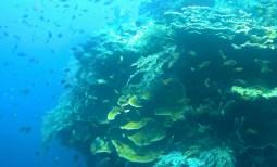 balicasag-island-dive-14_moment2