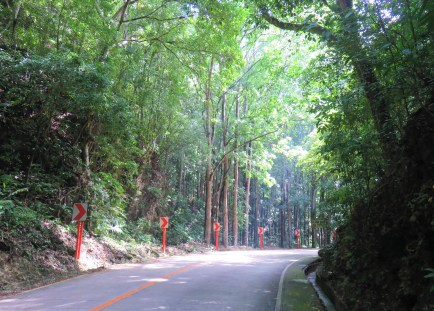 man-made-forest-2