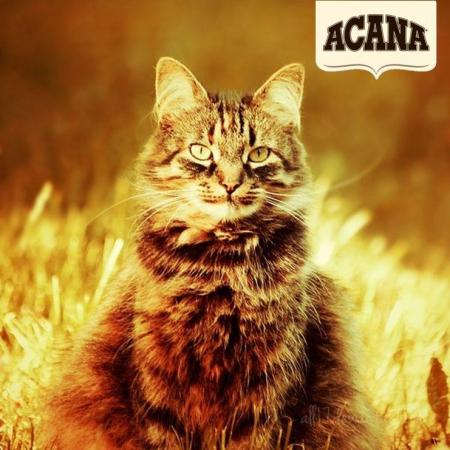 Acana Cat and logo