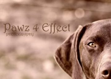 Paws 4 Effect Photography