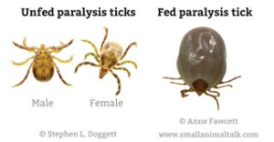 Paralysis Ticks