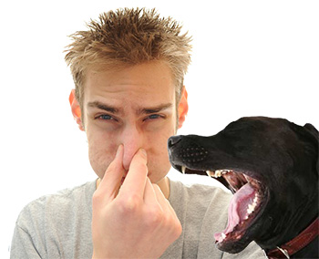 Bad Pet Breath