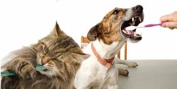 catdogbrush