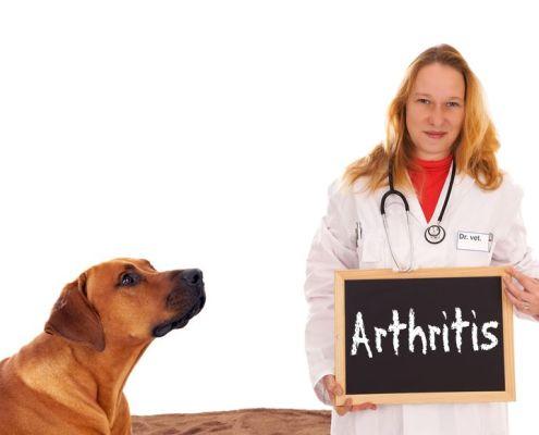 dog-arthritis