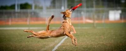 Mali catching frisbee