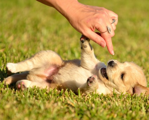 puppy-in-grass