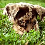 puppy-in-the-grass