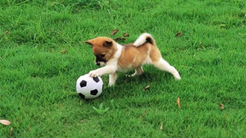 puppy-playing-ball