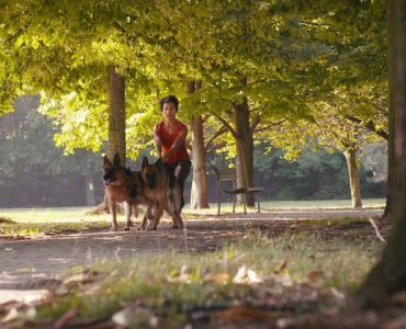 GSD Dog walker