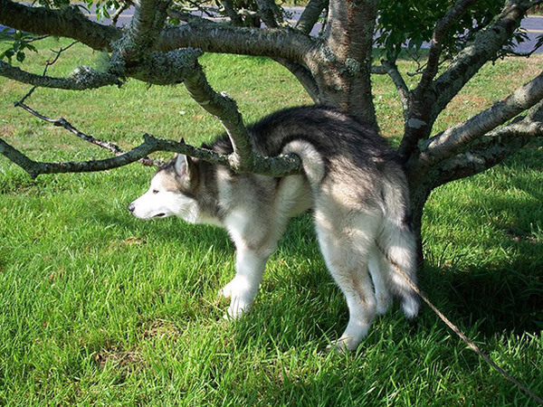 Image result for clumsy dog