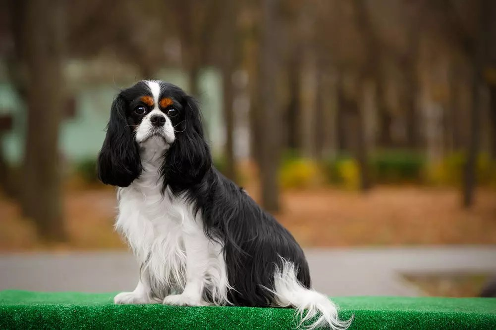 The 5 Best Dog Crates For Cavalier King Charles Spaniels