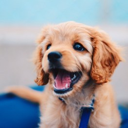 Mutt breed happy face dog