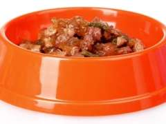 wet dog food in bowl