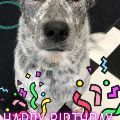 Kona Birthday