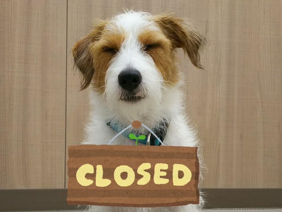犬の学校 11月3日はお休みです