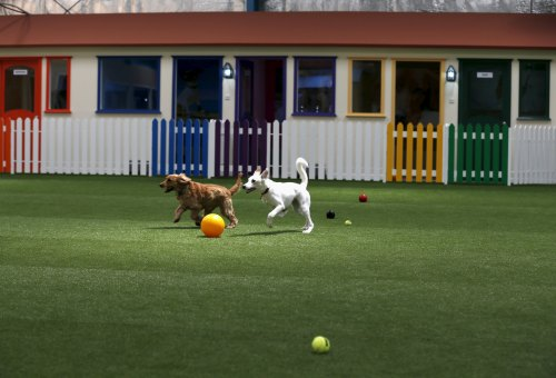 Dogs play at the indoor park of My Second Home, a newly opened luxury pet resort and spa, in Dubai, April 24, 2015. (Photo by Ahmed Jadallah/Reuters)