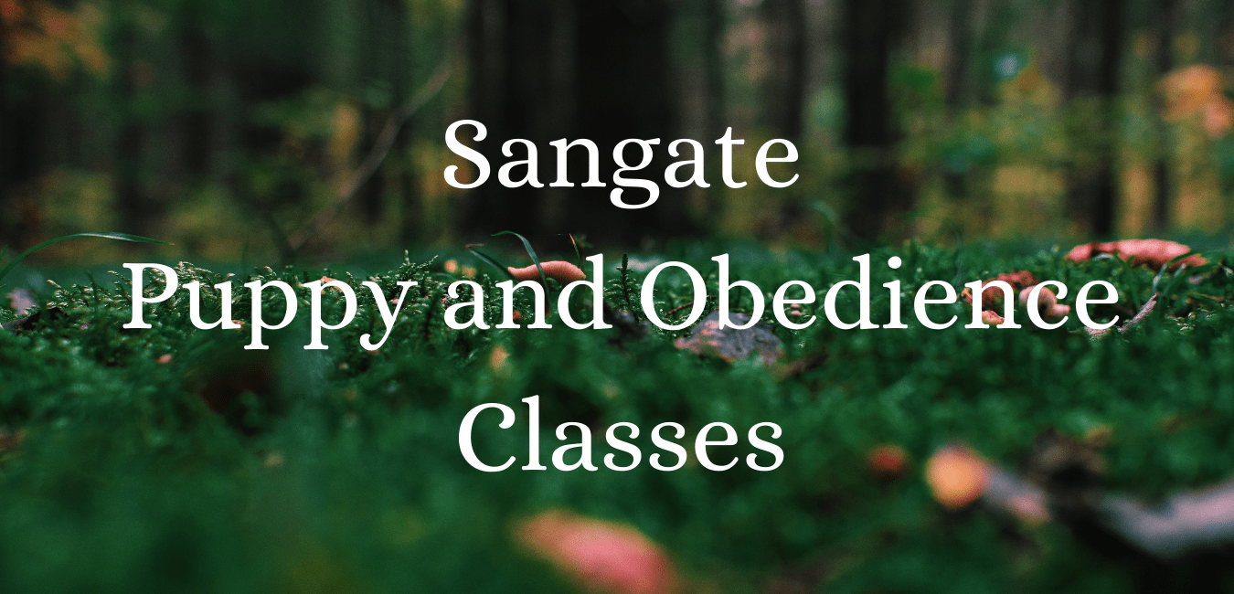 Sandgate Puppy and Obedience Classes