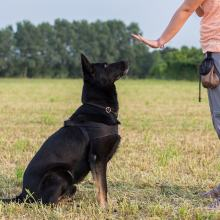 How To Train Your Dog To Sit ?