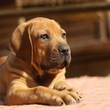 Incredible Urban Dog Training Tips