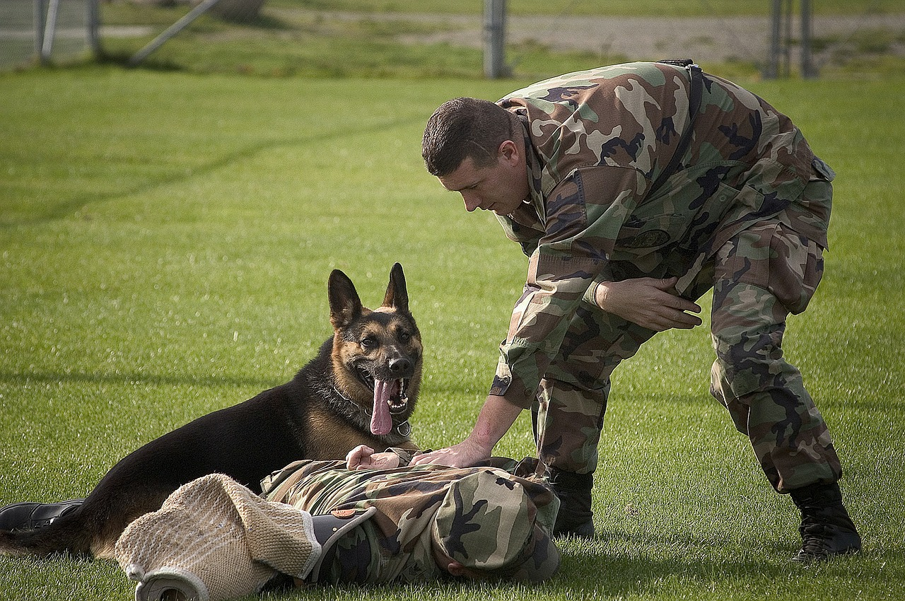 Tips about dog attack training you need to know