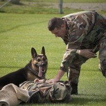 7 Tips about Attack Dog Training You Need To Know