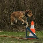 10 Step Dog Clicker Training for Newbies