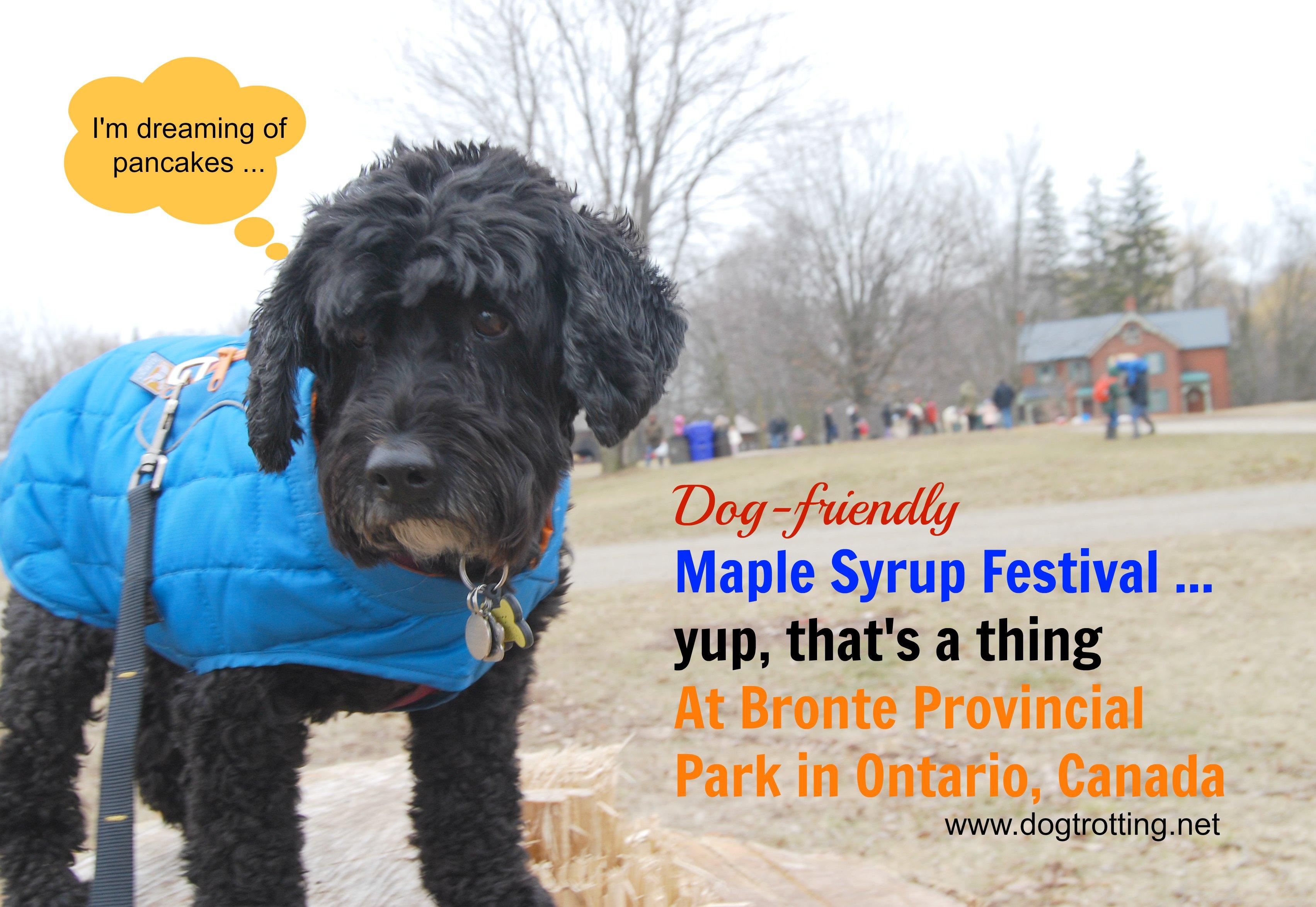 Park Quest Site #3: Bronte Creek Provincial Park Maple Syrup Festival