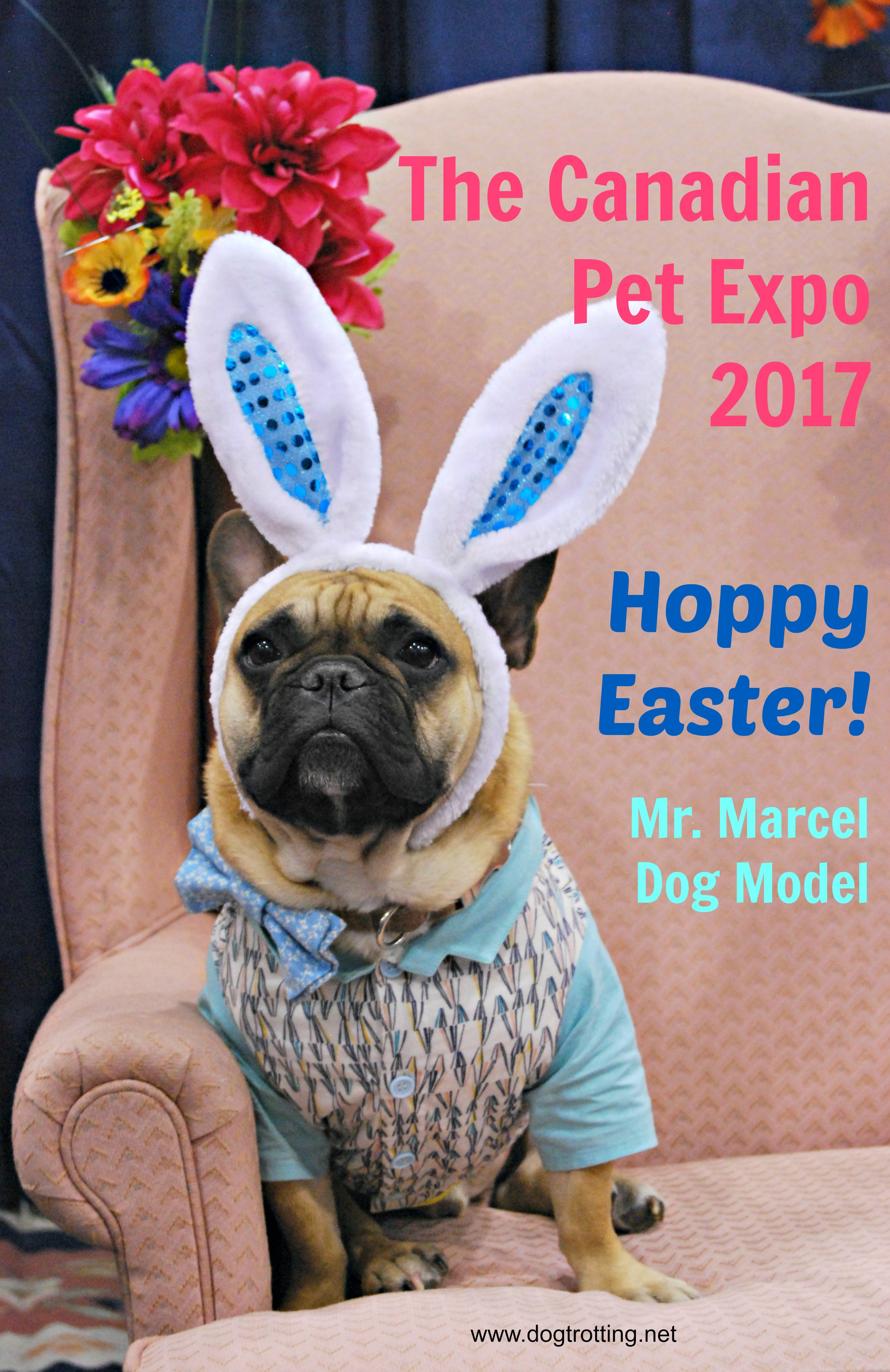 Toronto: More Litter More Love at the Spring Canadian Pet Expo 2017