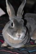 Tina Twinkle Bunny