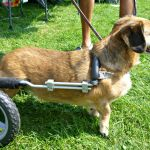 Dog in wheel chart at Weinerpawlooza 2015