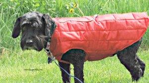 vic in kurgo jacket