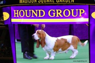 hound group