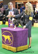 WKC Dog Show Breed Judging 6
