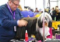WKC Dog Show Breed Judging 7