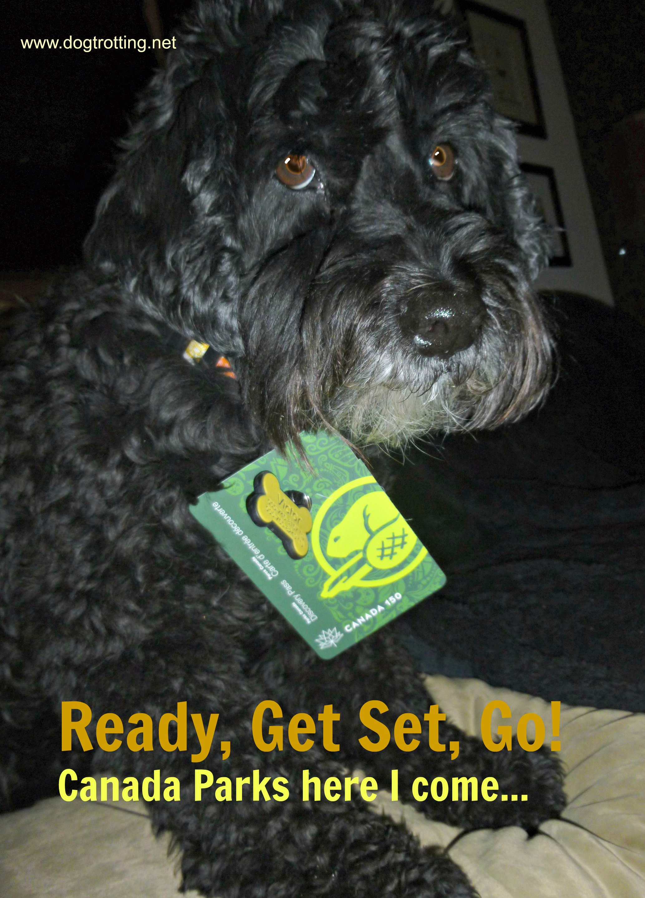 dog with canada parks pass