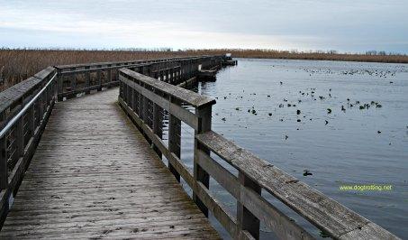 Marshland Boardwalk at Point Pelee National Park