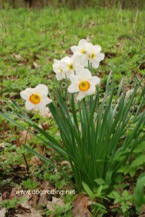Spring Flowers at Point Pelee