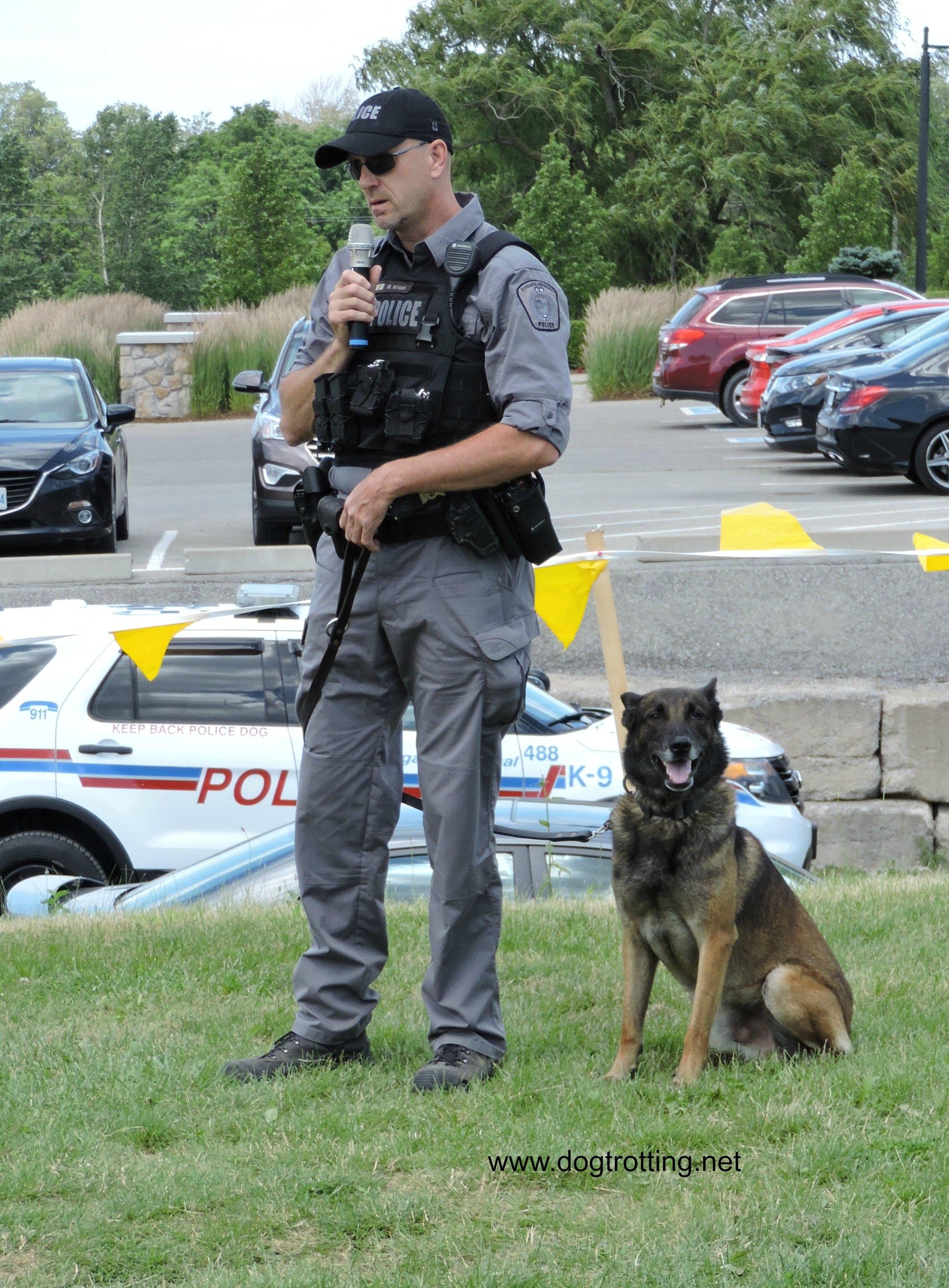 police dog demonstration at muddy paws wine and dog festival vineland ontario dogtrotting.net