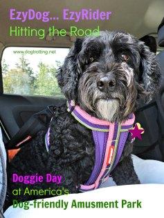 dog wearing EzyDog chest harness
