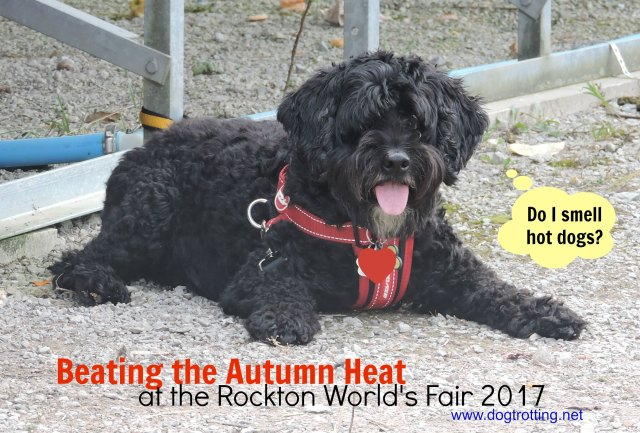 Dog at Rockton World's Fair 2017 dogtrotting.net