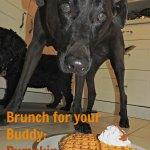dog eating pumpkin waffle
