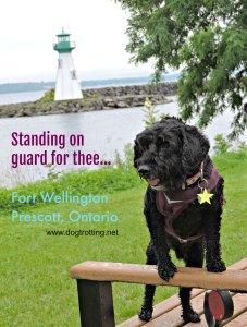 dog along river near dog-friendly Fort Wellington, Prescott, Ontario