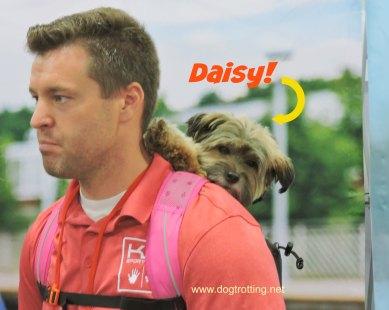 K9 Sport Daisy