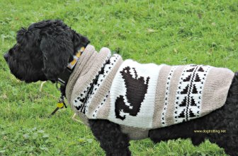 Dog wearing Chilly dog sweater