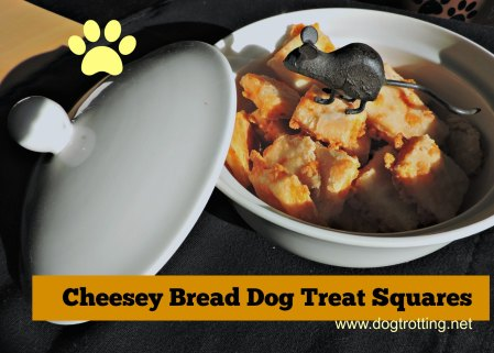 cheese square dog squares