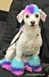 white dog with blue and pink colouring