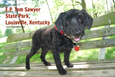 dog on bench at E.P. Tom Sawyer State Park
