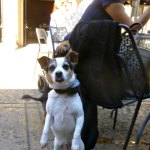 dog in cafe Balboa Park, San Diego, California
