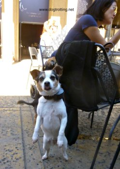 dog in cafe Balboa Park, San Diego, California