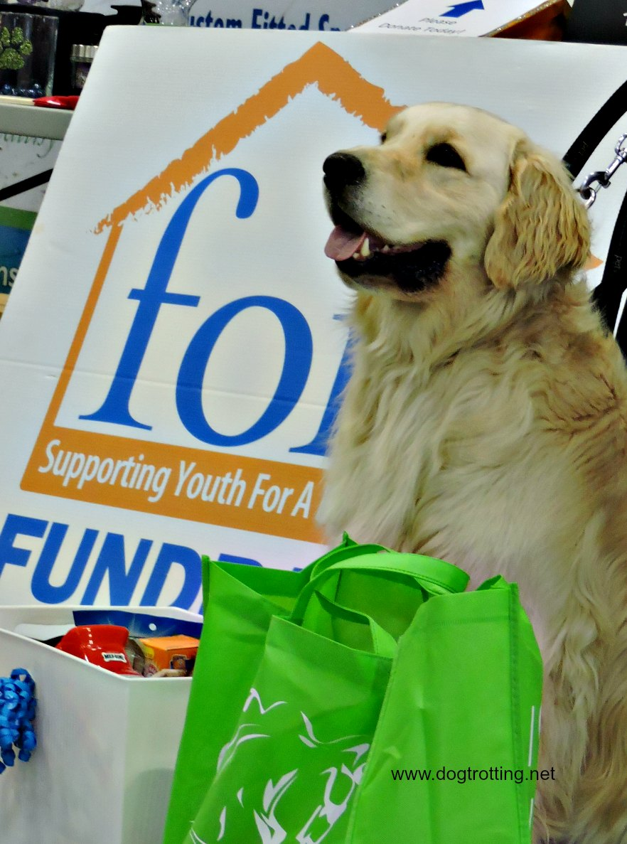 golden retriever at Dogs 4 Youth event